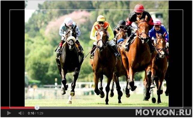 Видео про скачки на лошадях
