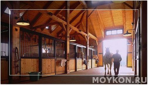 Содержание лошади в деннике