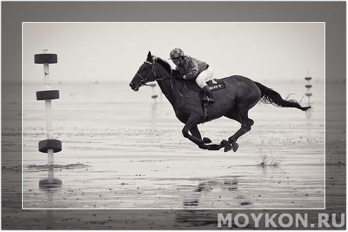 Цена за лошадь спортивную