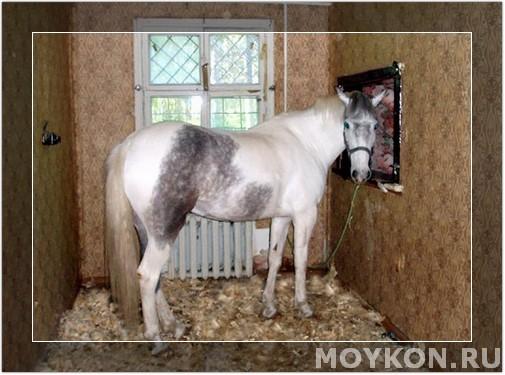 Лошадь в квартире хаха