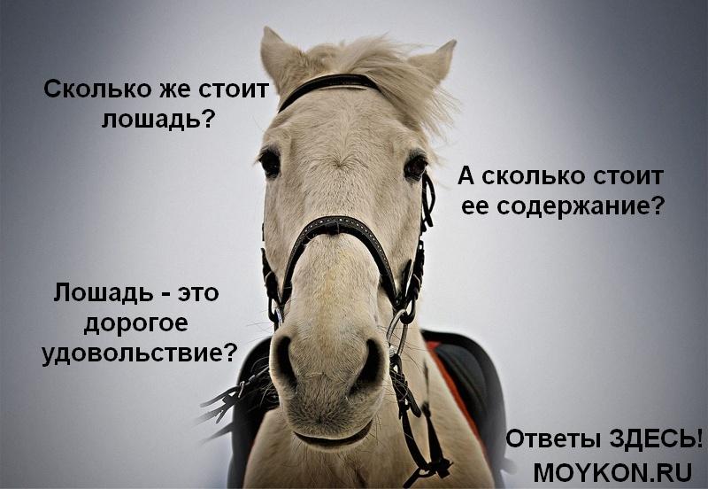 Сколько стоит лошадь