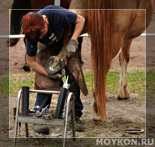 Правильный уход за копытами лошади