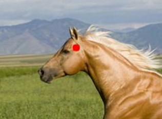 Как сделать недоуздок лошади 39