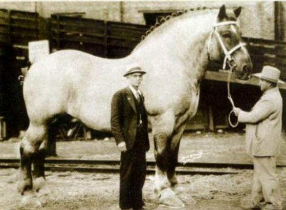 Мамонт конь