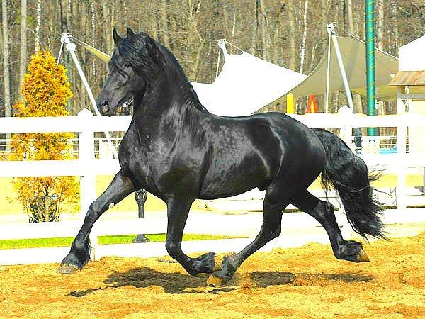Аллюры лошадей