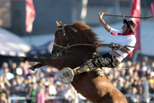 Родео на лошадях