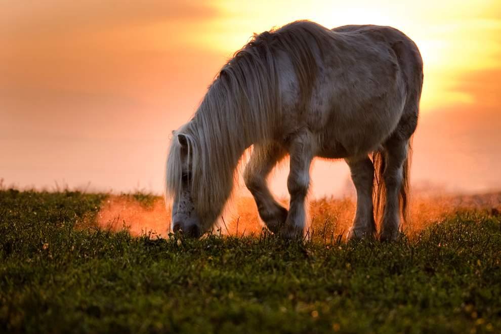Красивые пони