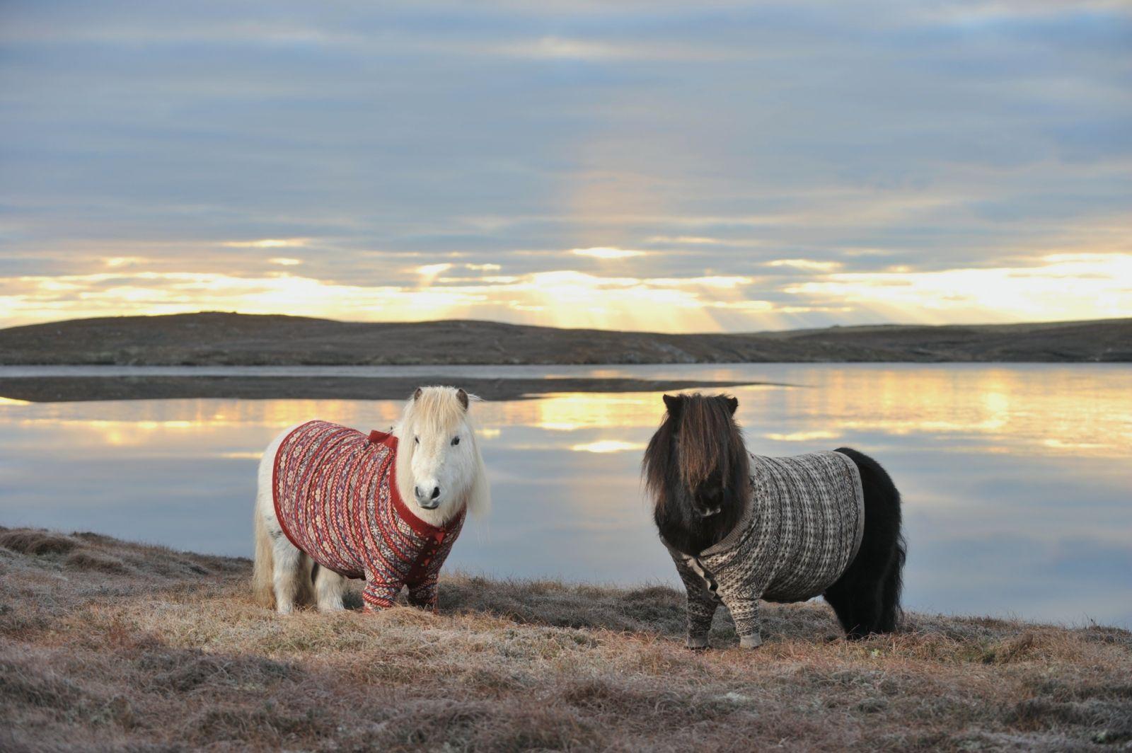 Красивые пони в одежде