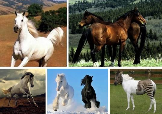 ТОП 5 самых красивых лошадей