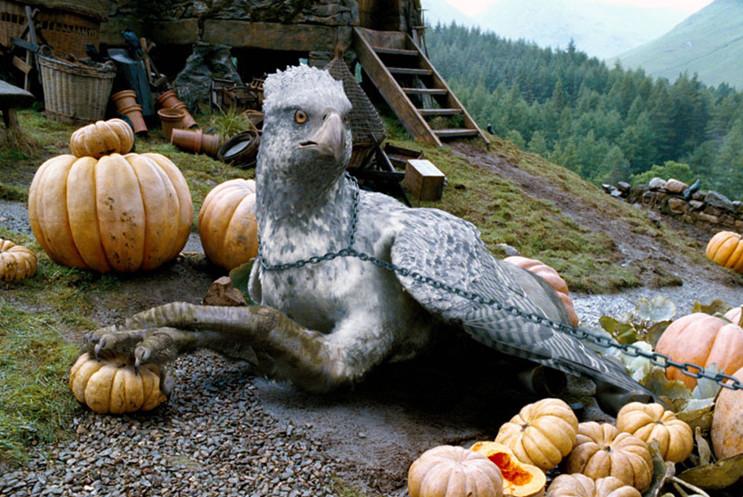 Гиппогриф из Гарри Поттера