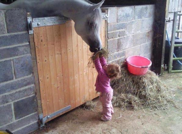 Сеном кормят коня