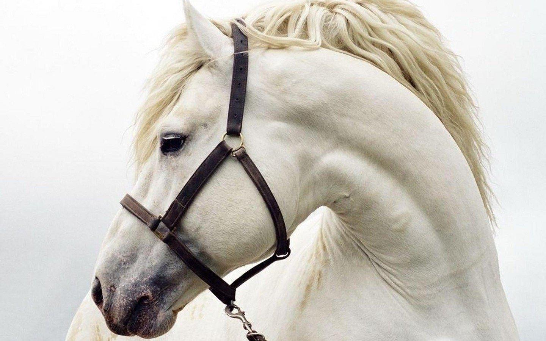 лошади морды фото
