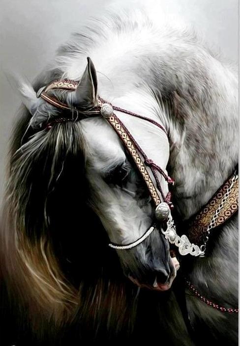 голова лошади фото - фото 4