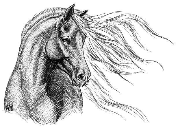 Большие рисунки лошадей