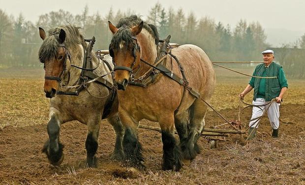 Фото лошади рисунки