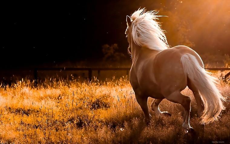 Скачать заставки на компьютер бесплатно с лошадьми