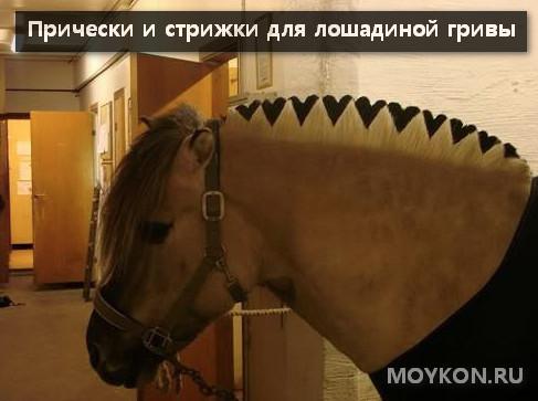 Прически и стрижки гривы лошадей
