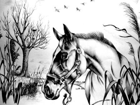 картинки лошадей с наездником карандашом