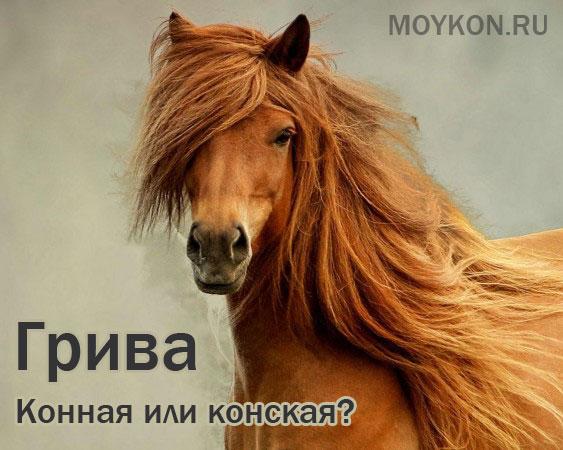 Конская грива