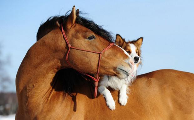 Лошадь и собака