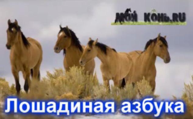 Видео лошадей на букву А