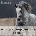 редкие лошади