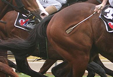 Хлыстом по крупу коня
