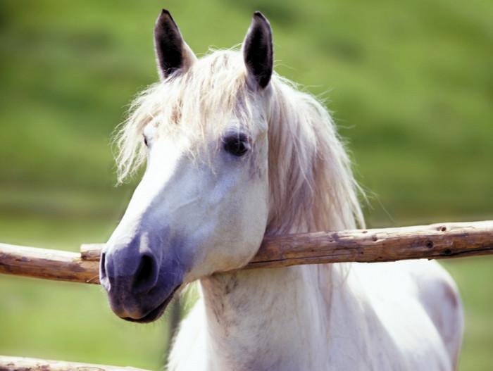 Клевая лошадка