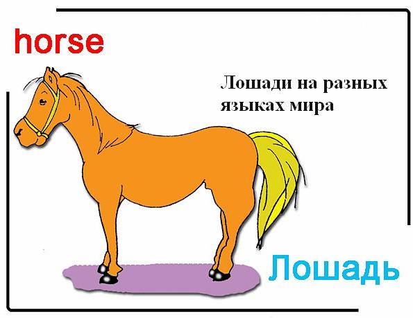 Лошади на разных языках