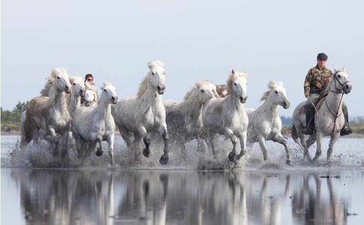 Лошади по-французски