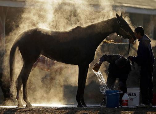 Минусы работы конюхом
