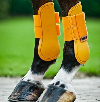 Ногавки для лошади