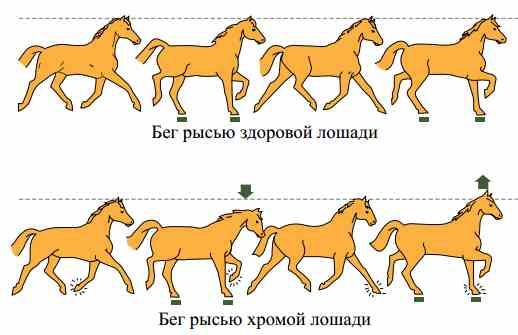 Рысь лошади 2