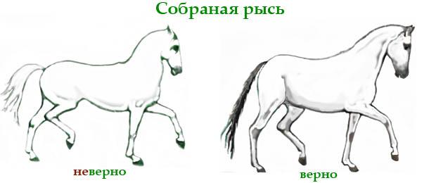 Рысь лошади 5