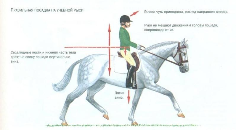 Рысь лошади - правильная посадка