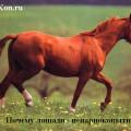 лошади непарнокопытные