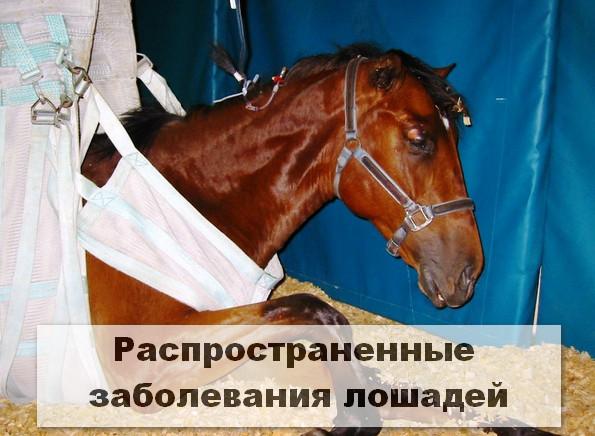 Распространенные заболевания лошадей