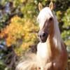 Сколько живут лошади и почему?