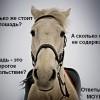 Сколько стоит купить и содержать лошадь в России?
