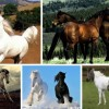 Самые красивые лошади в мире — ТОП-5 пород